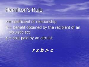 altruism hamiltons rule